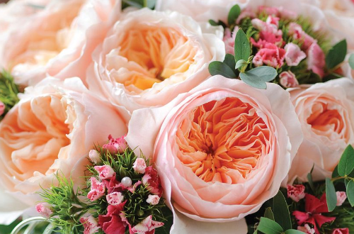 رز ژولیت Juliet Rose